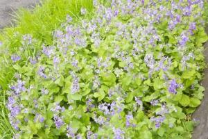 青木神社の春4