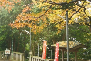 青木神社の秋